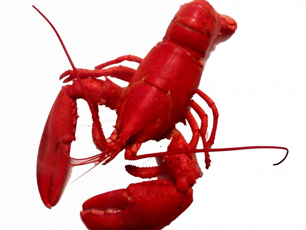 cooked-lobster